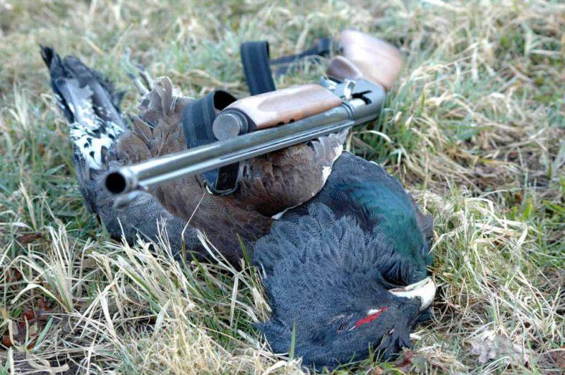 Охотничье-рыболовное хозяйство «Зайцева Гора» - охота и рыбалка в Калужской области